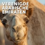 BBN Verenigde Arabische Emiraten
